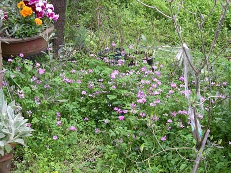 花壇の中にまくと春には土壌も改善される