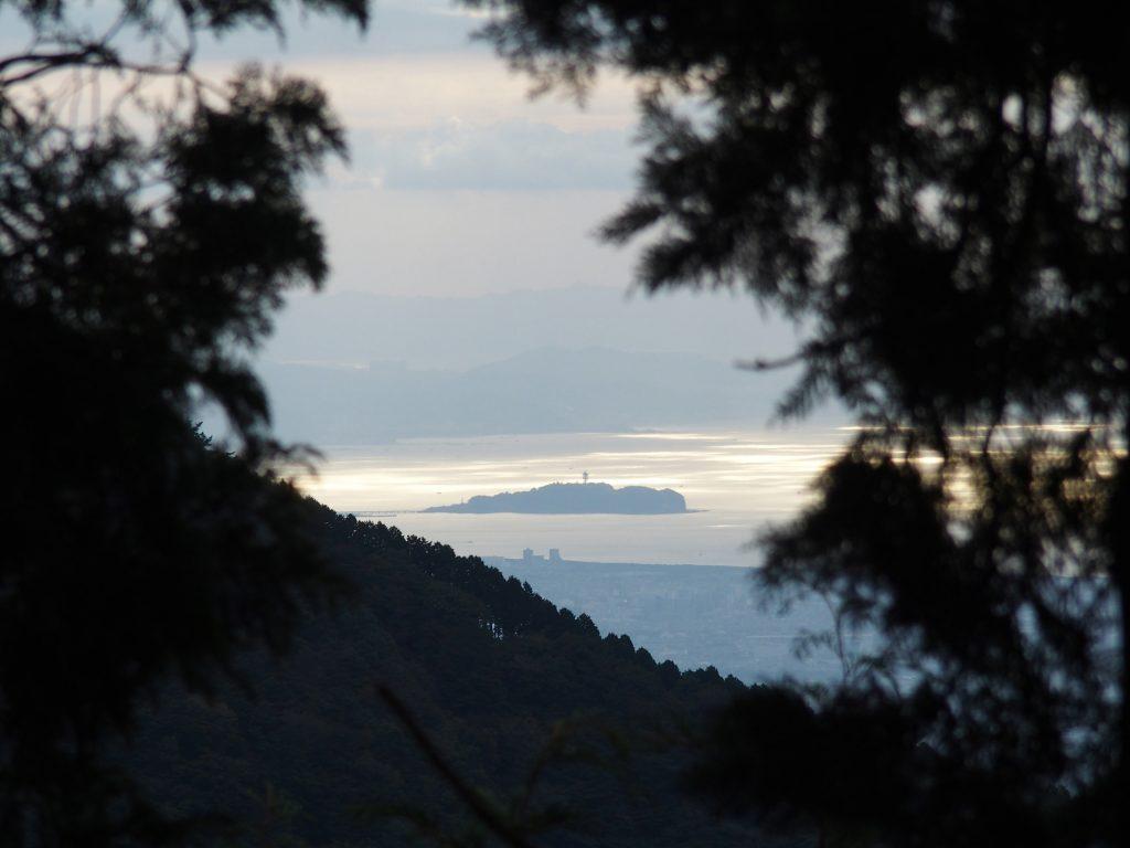 樹林越しに江の島が見える