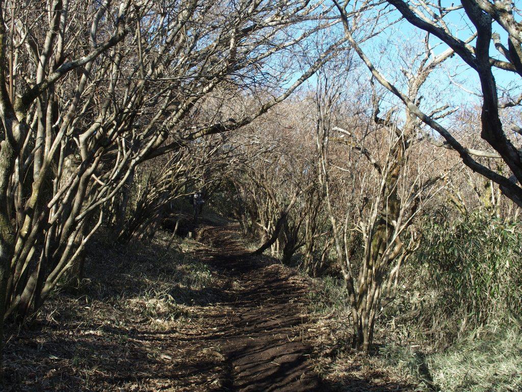 アーチ状に登山道を覆う樹木