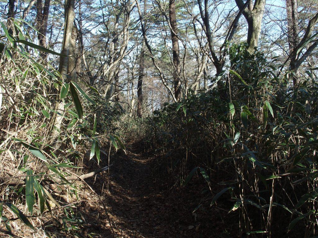 笹藪の登山道