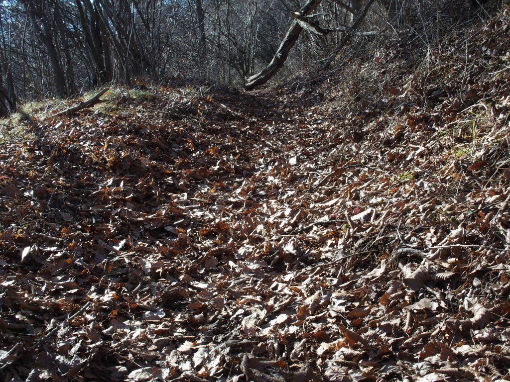 落ち葉でびっしりの広葉樹林