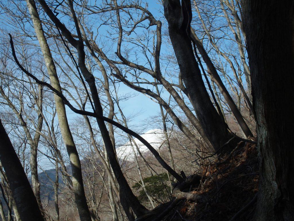 林の中から富士山