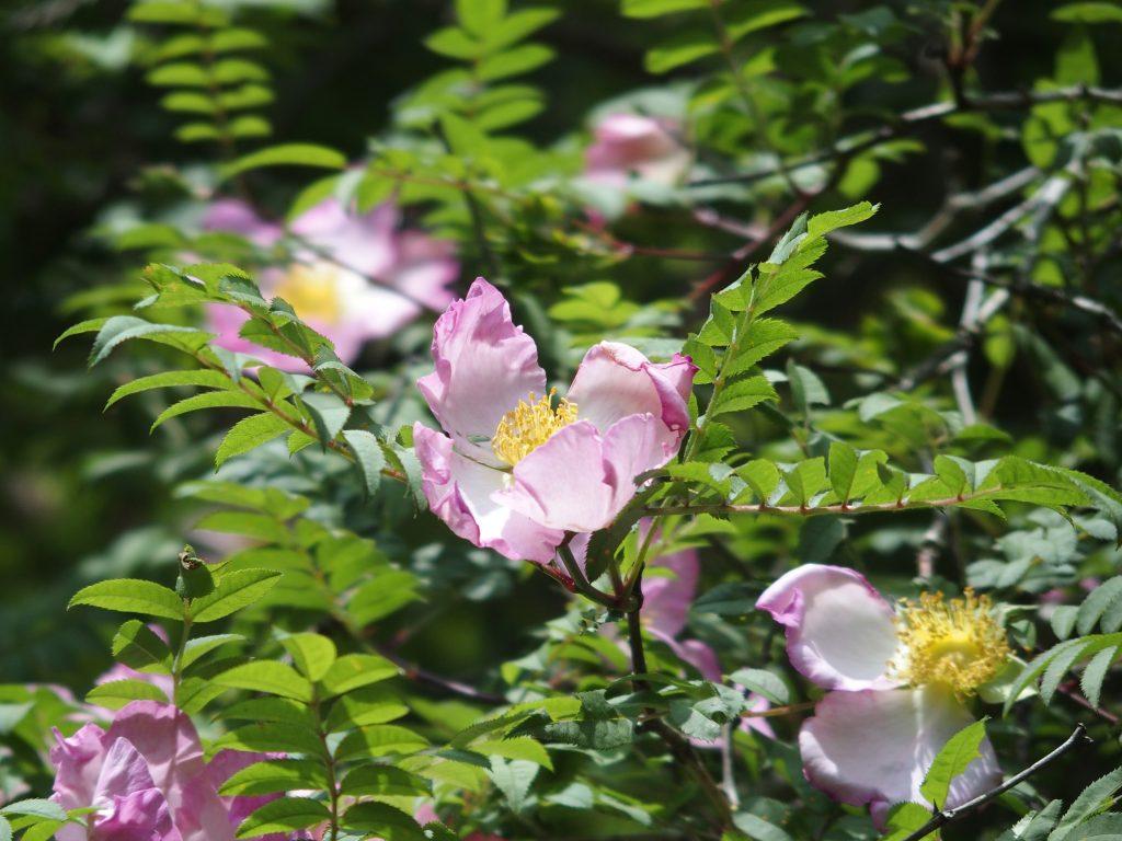 独特な、派手な花
