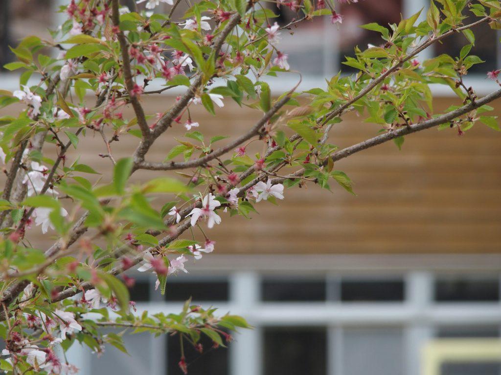 花の背景に木造校舎