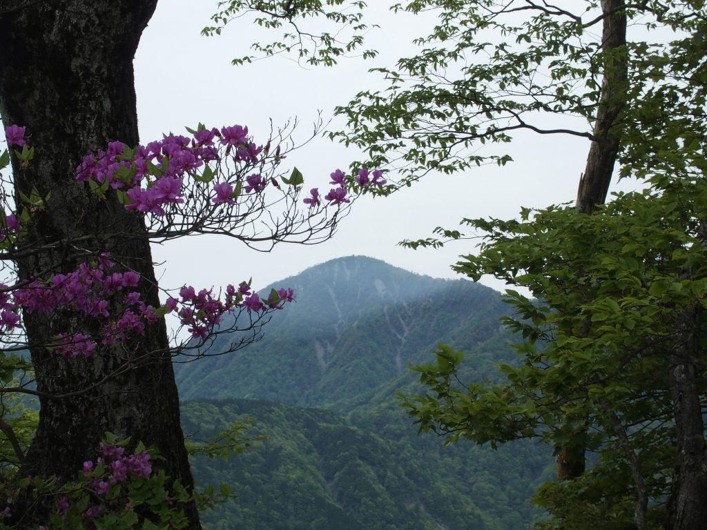 鍋割山稜からの蛭ヶ岳