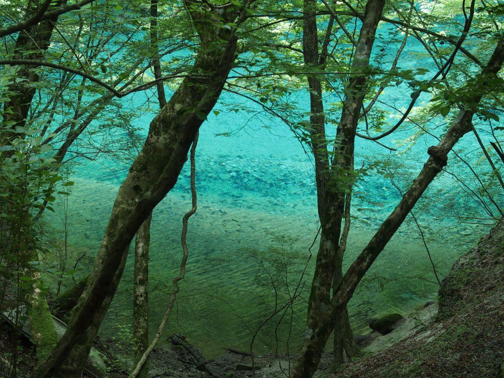 木々の間に青い水