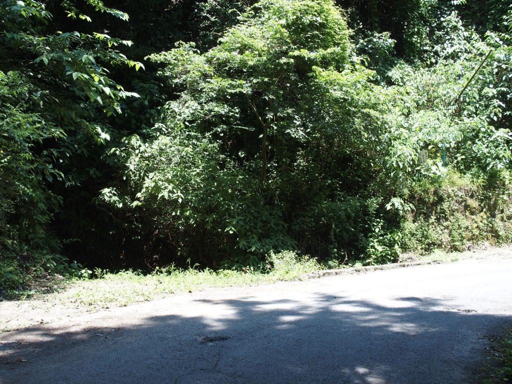 滝の前の道路沿い