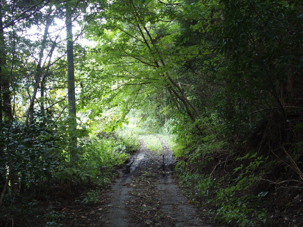 林の中に続く農道