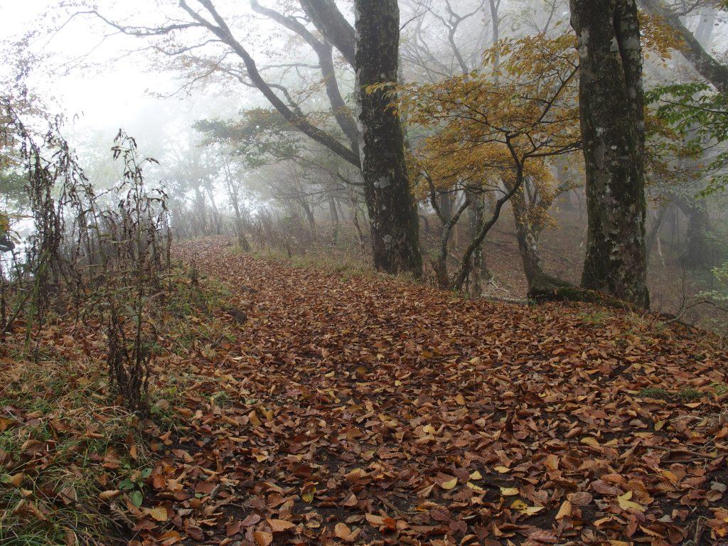 落ち葉が敷き詰められた森