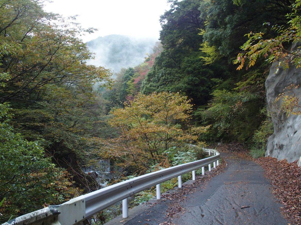 紅葉する林道