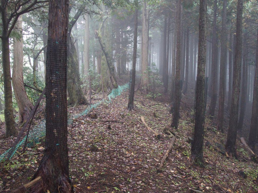 植林の中を鹿柵が横切る