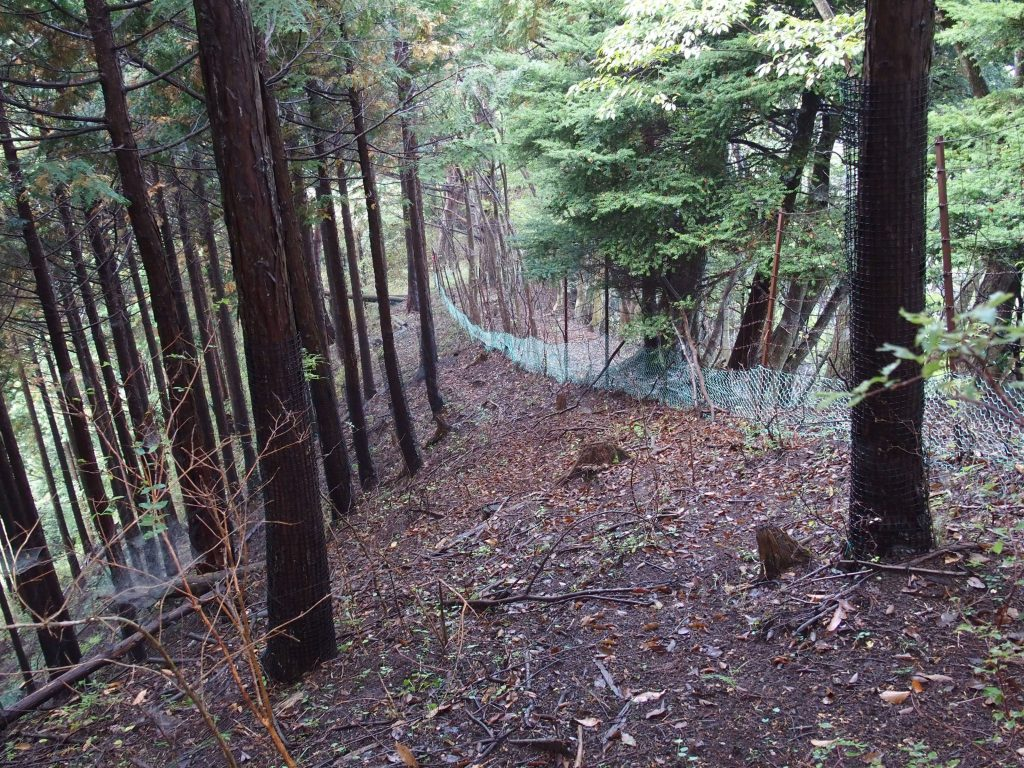 鹿柵が尾根を下る