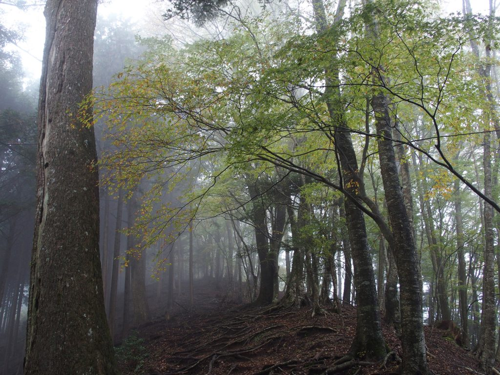 ブナ林の中を歩く