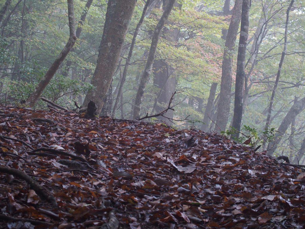 登山道には落ち葉が積もる