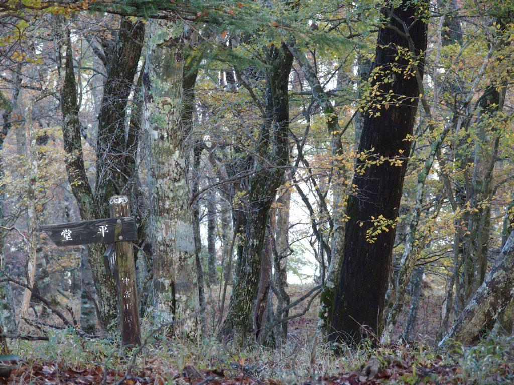 林の中の指導標