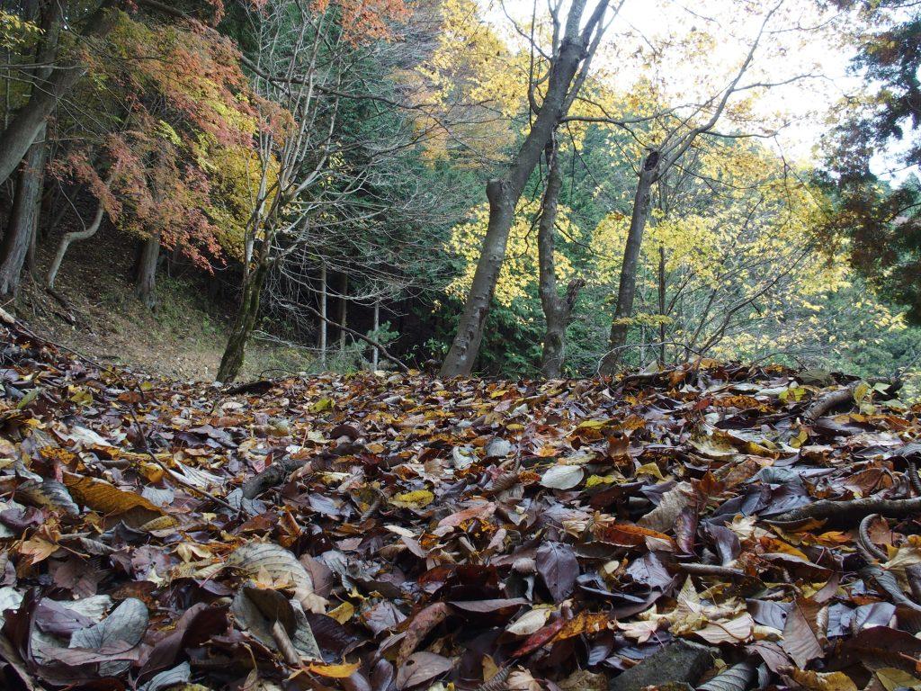 落ち葉と広葉樹は低い地点でも楽しめる