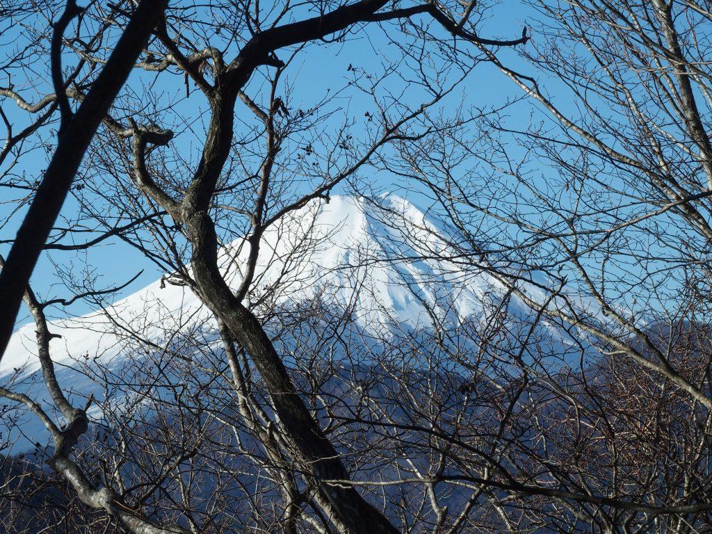樹林の向こうに富士山が見え始める