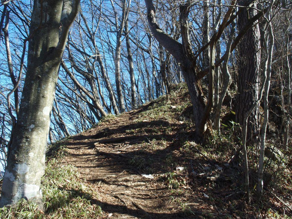 登山道らしい登山道を登る