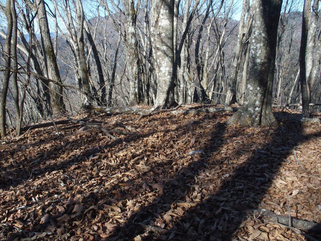 広葉樹の葉は散ってしまった