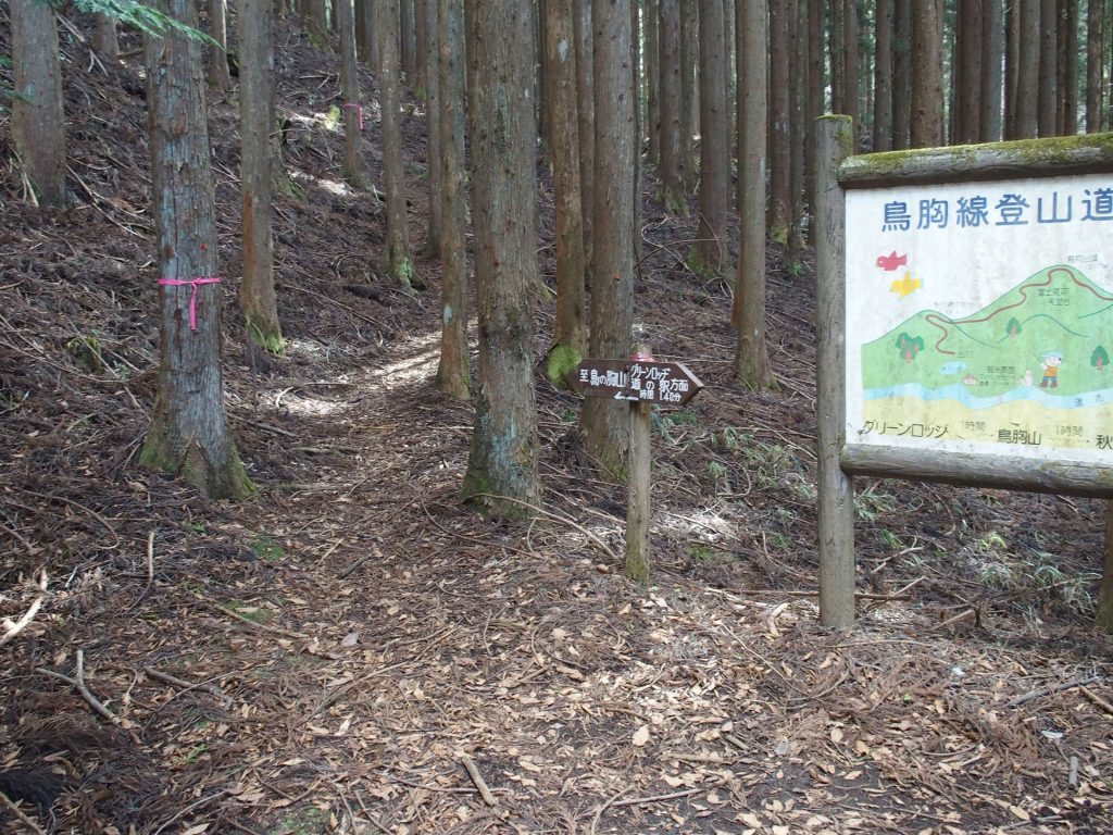 登山道が始まる地点は植林