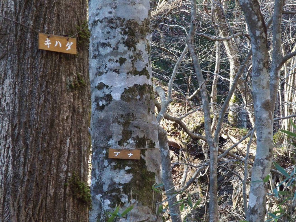 樹種を示す札がかけられている