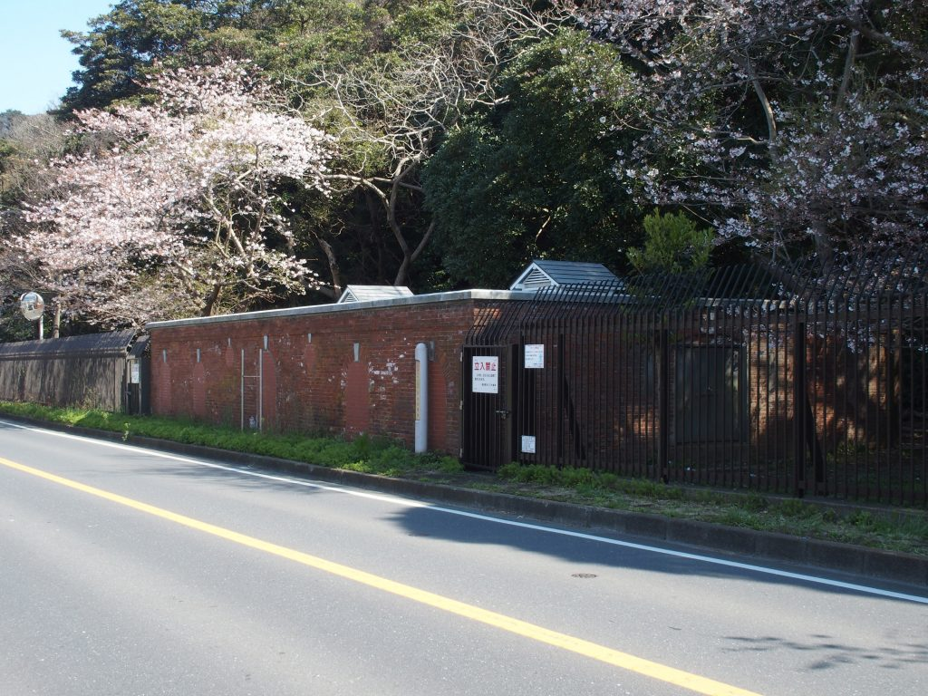 貯水池と桜