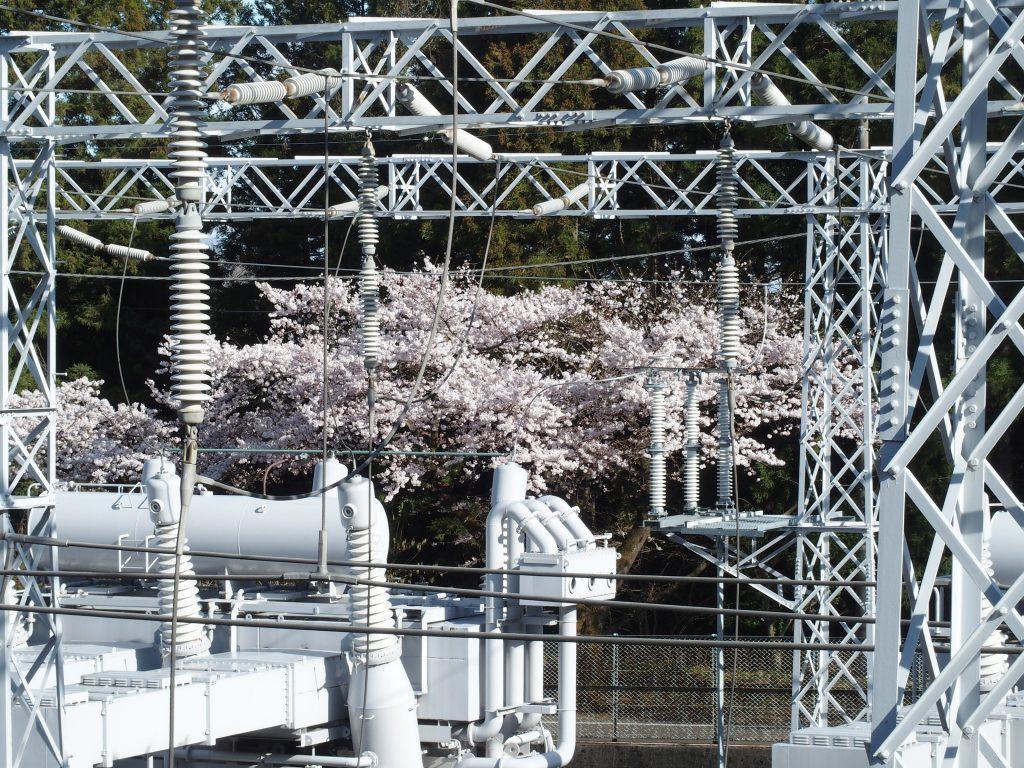 メカらしい設備と桜の対比がいい