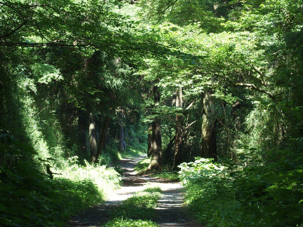 広葉樹のなかの道