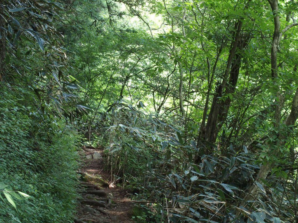笹が茂る小道