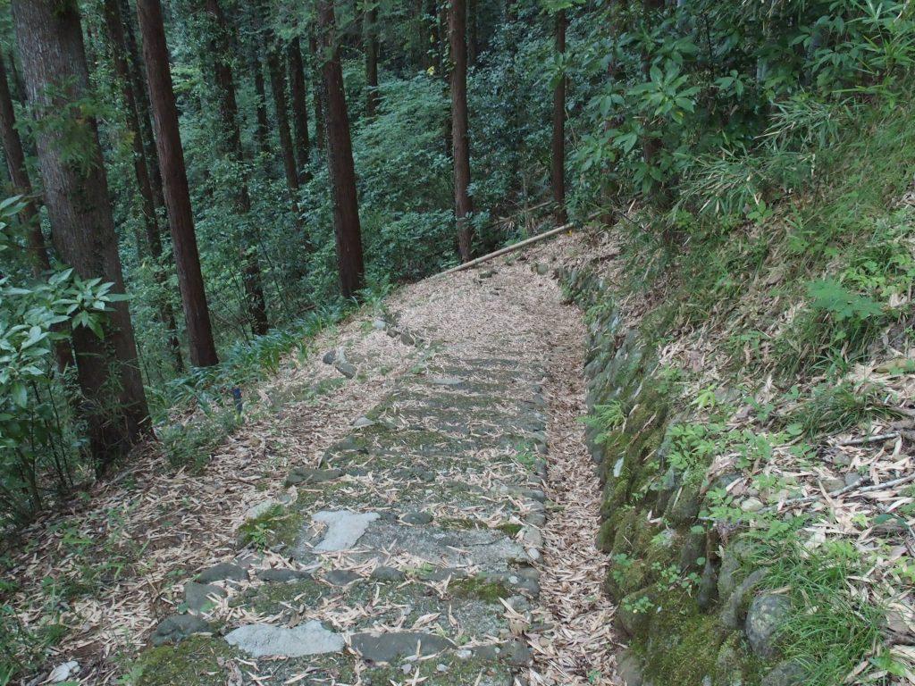 林の中の階段