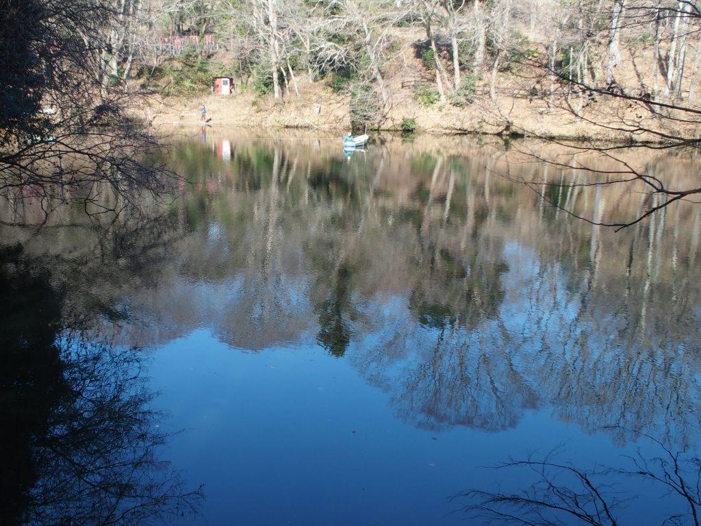 湖面に木々が映る