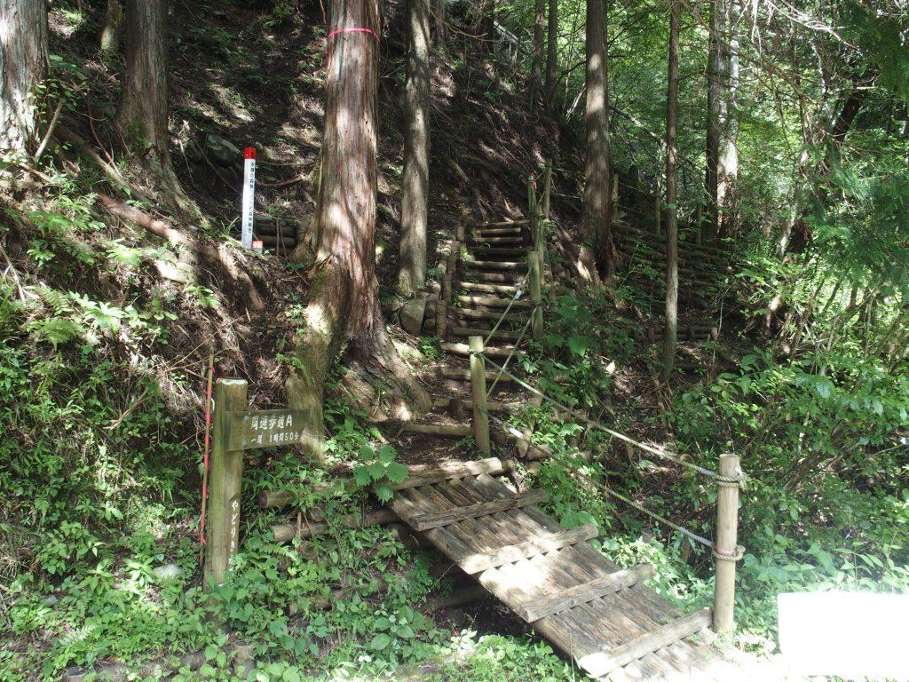 林道を離れ林の中を登りはじめる