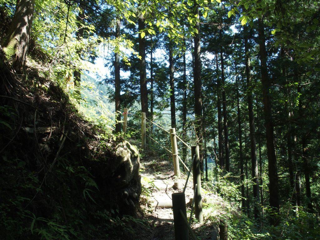 樹林の中を歩く