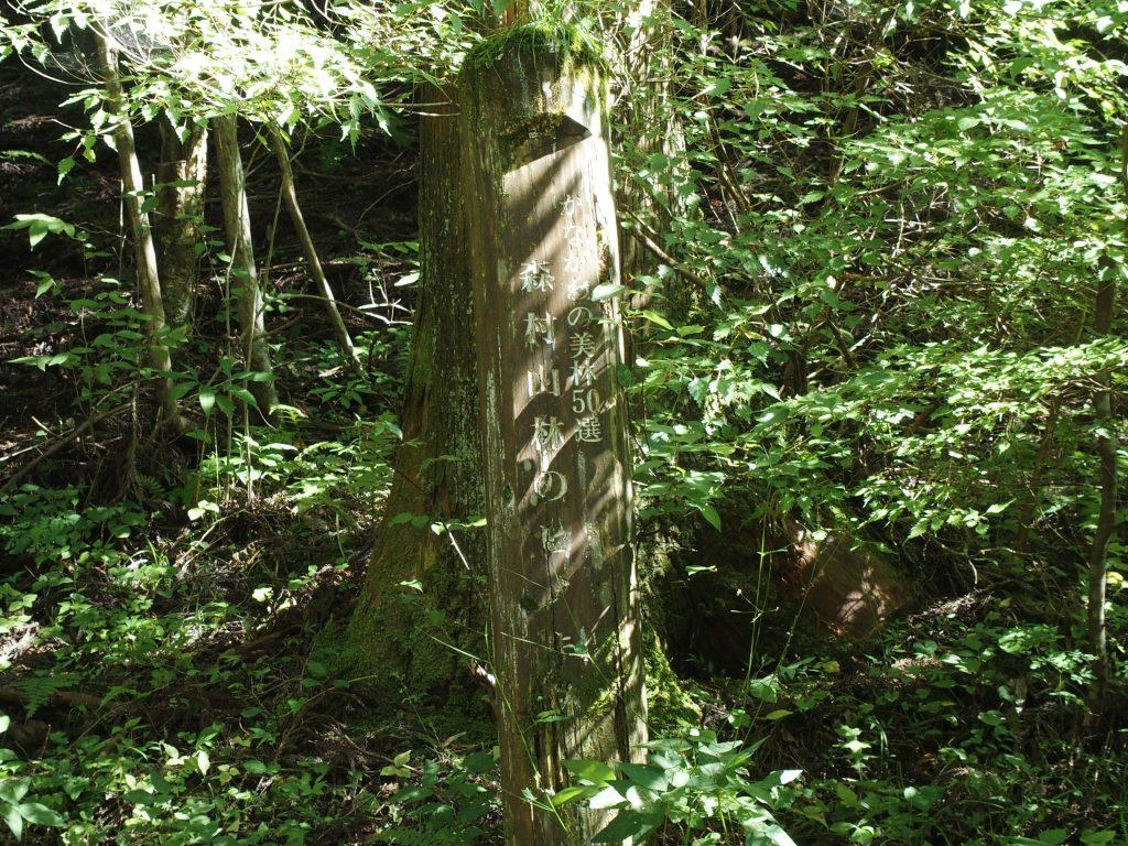 標柱も建つ森村山林のヒノキ林