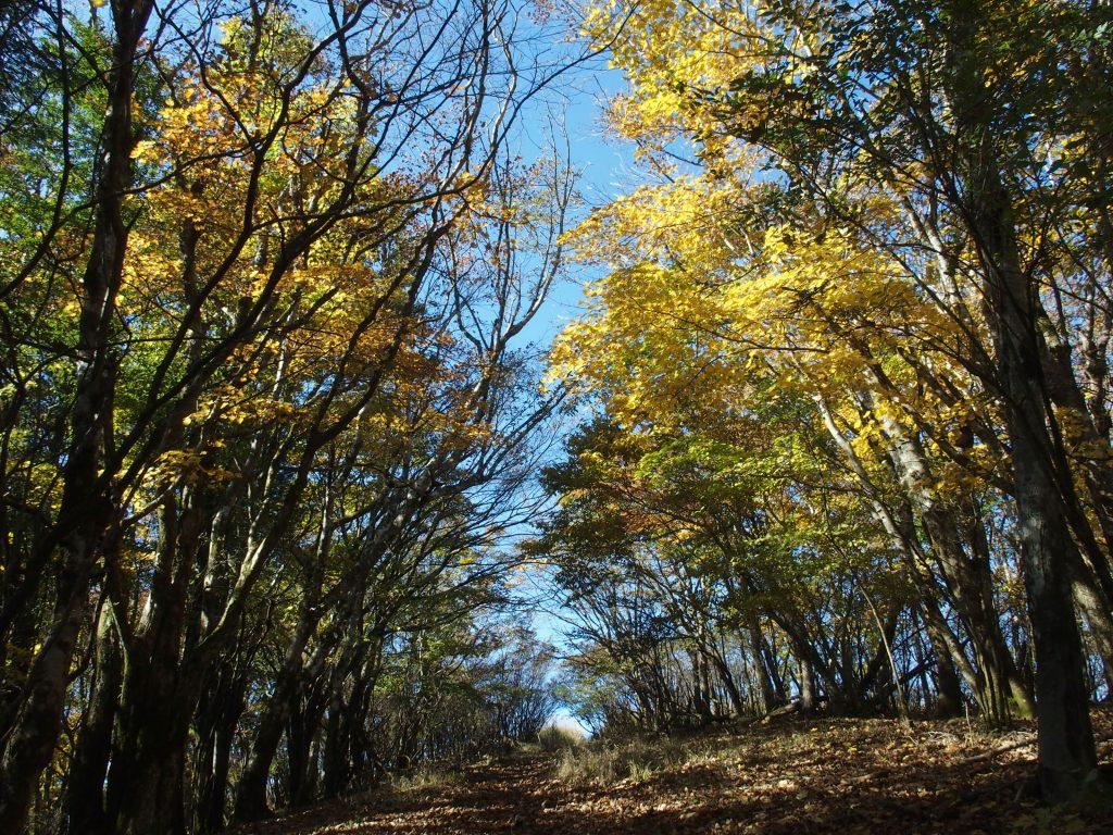 こちらは広葉樹林