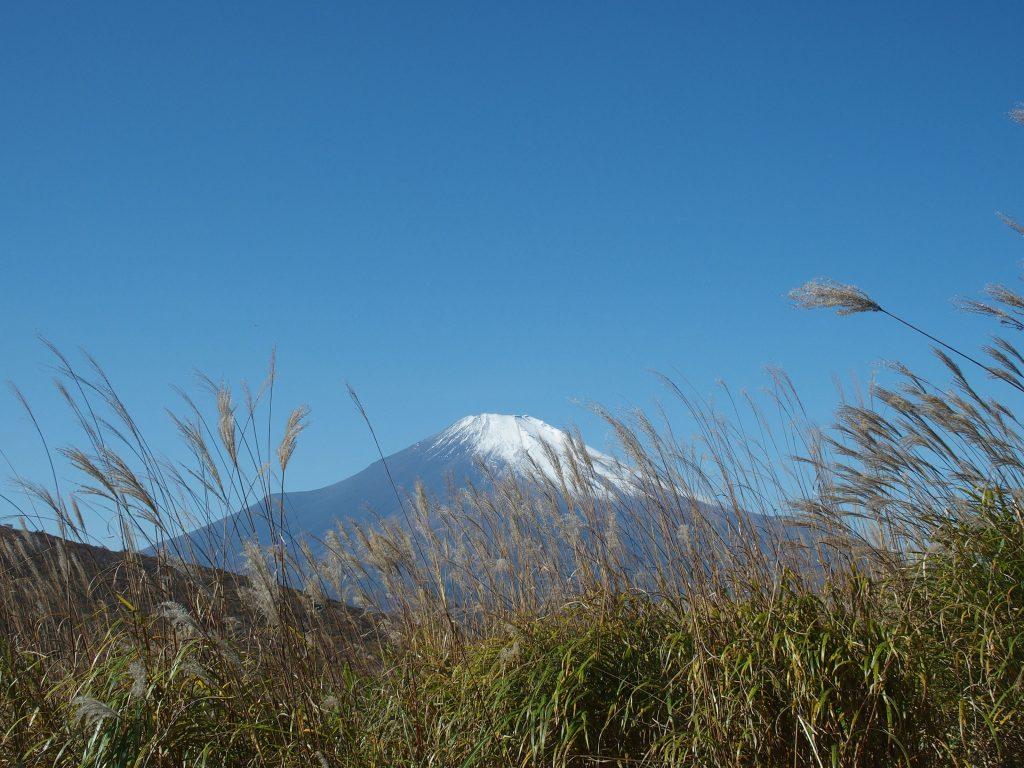 ススキ野原に富士山