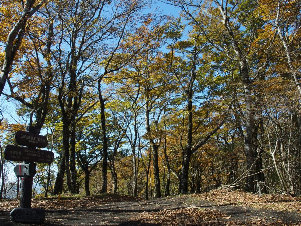 広葉樹の山頂