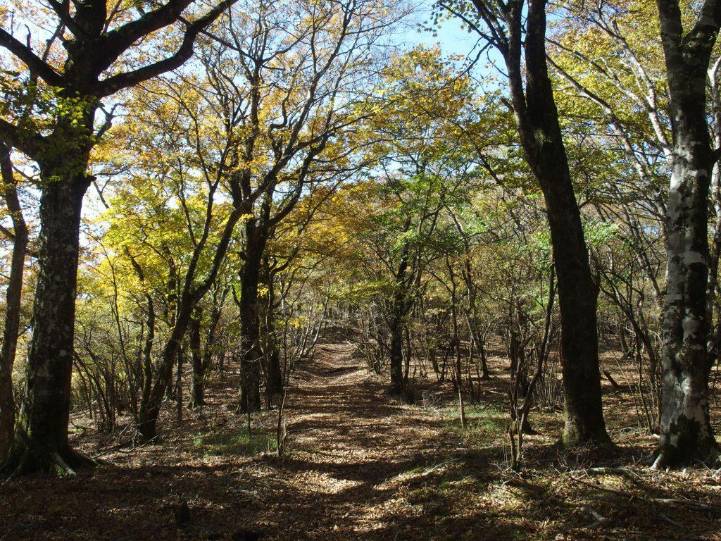 広葉樹の林の中を歩く