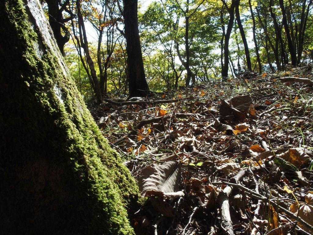 苔生した幹と落葉
