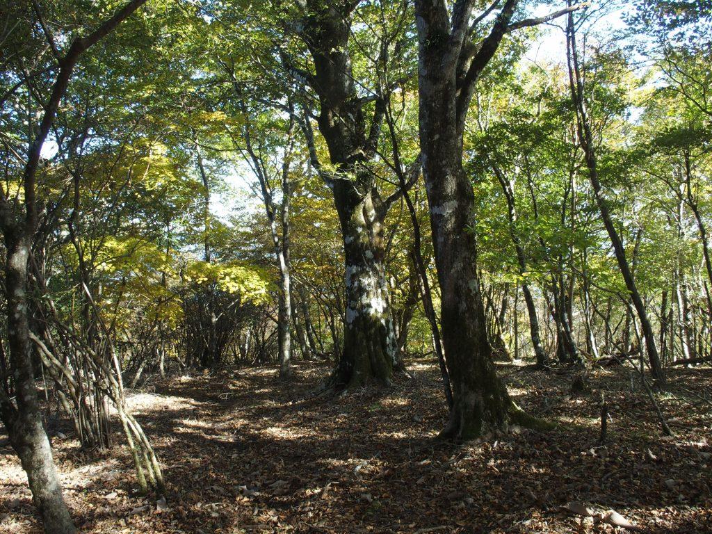 巨木群地帯