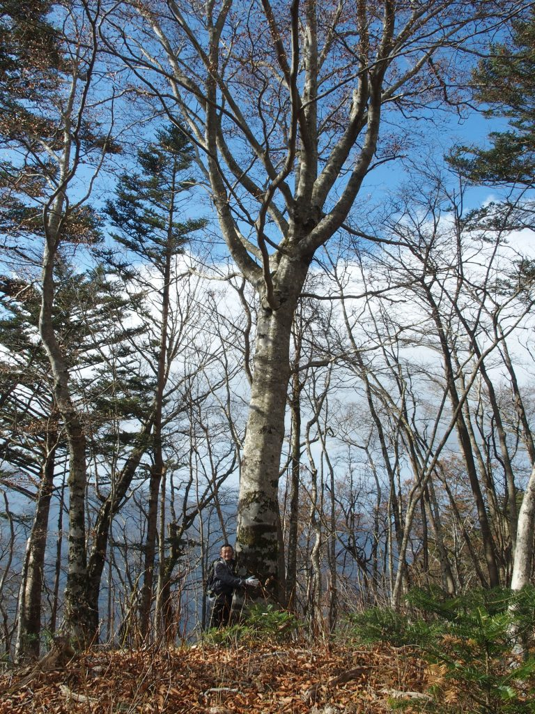 樹齢200年ぐらいはいっている