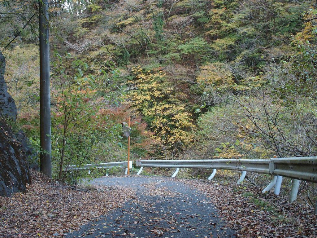 用木沢出合からの林道