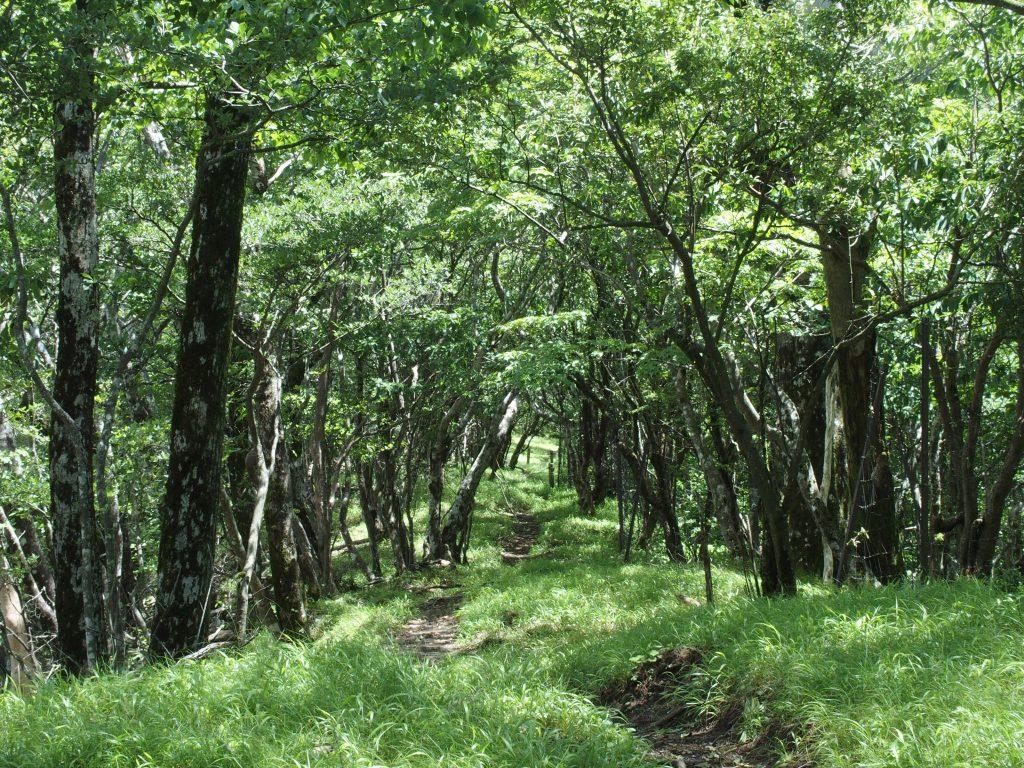 青い森を歩く