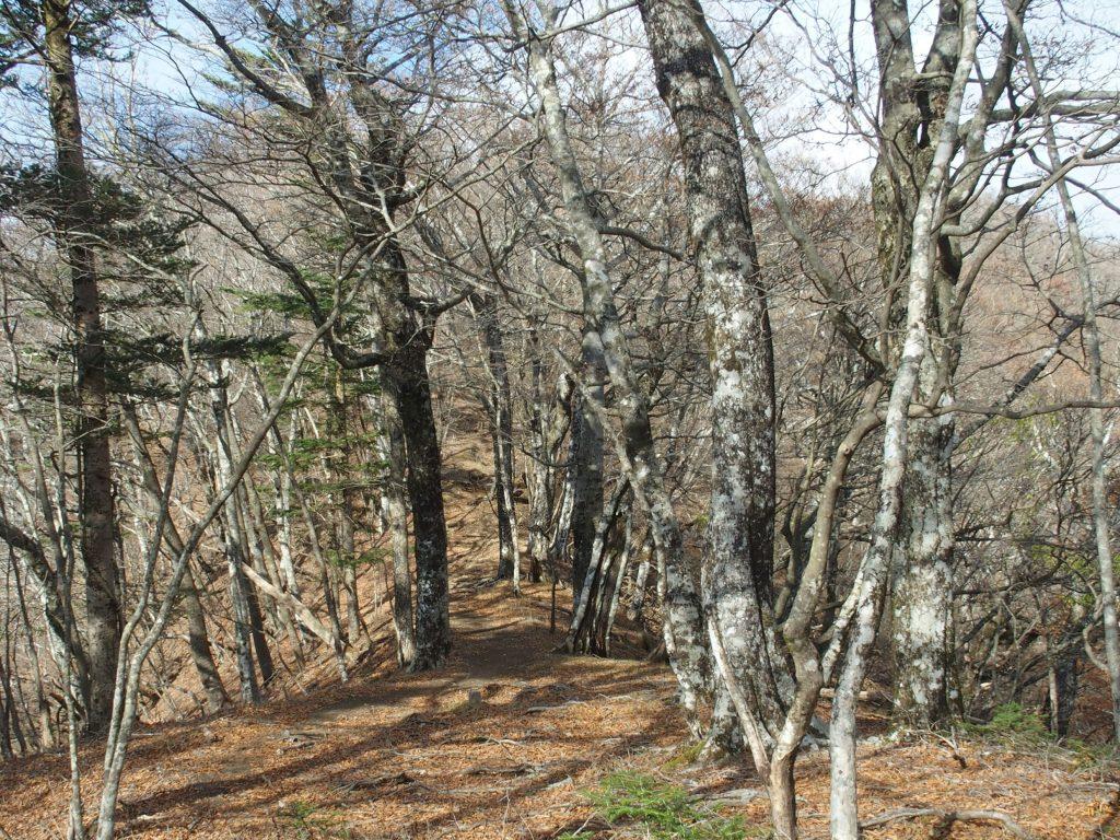 冬、幹が鮮明に