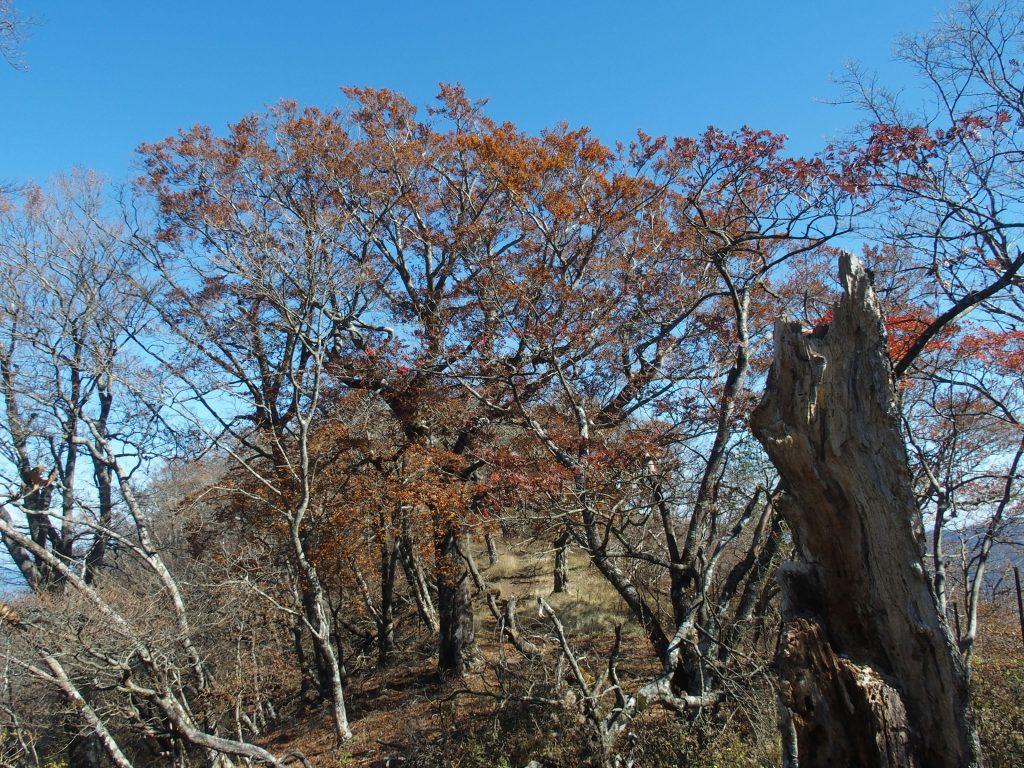 稜線に大木がアーチを作る
