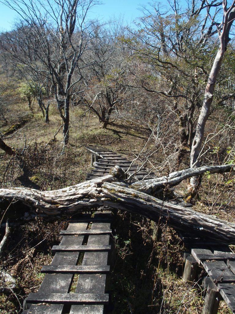倒木が木道を遮る