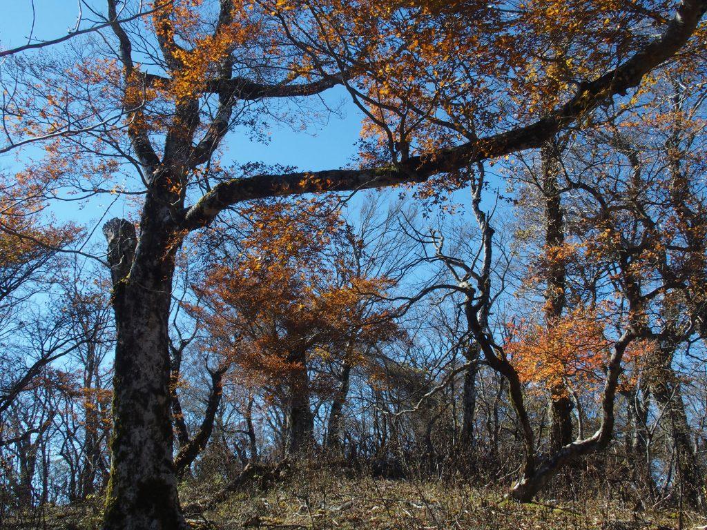色づく森を歩く