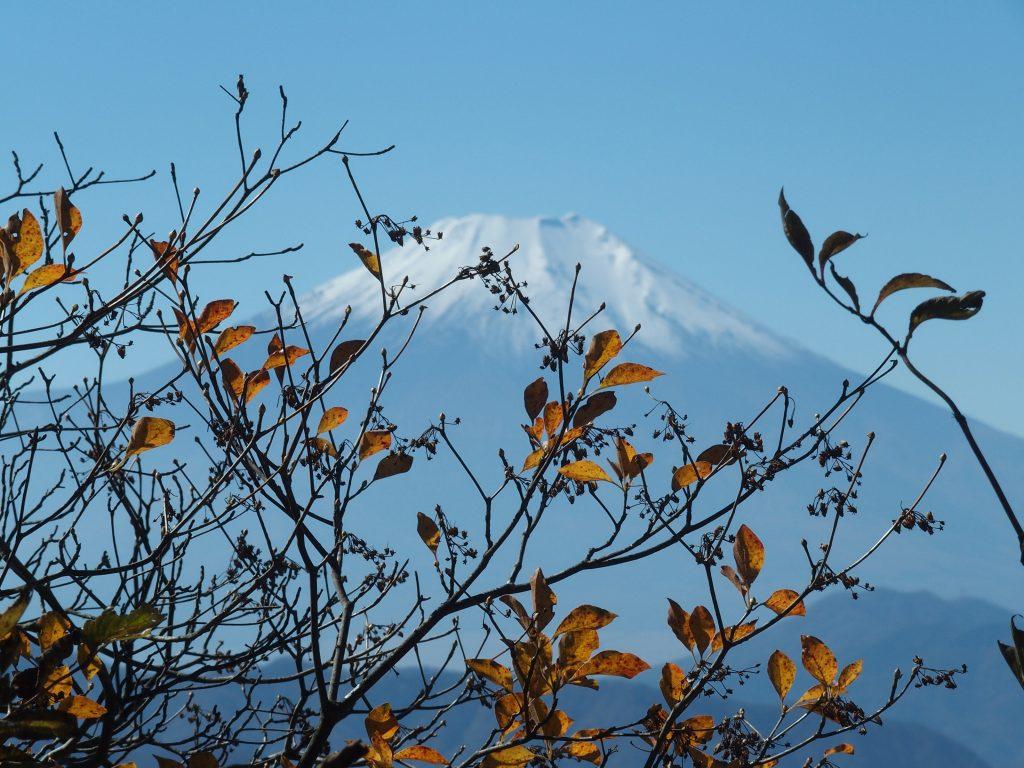 紅葉の向こうに富士山