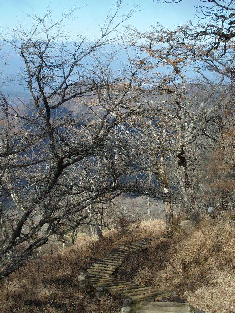 ブナの木々を抜けて階段が続く