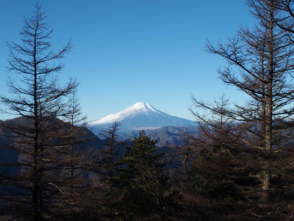 カラマツの向こうに、富士山